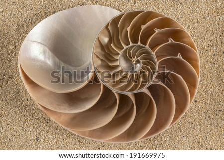 Brown Nautilus Shell This cut section of a Naitilus shell reveals its incredible growing chambers in a mathematically exact proportion.  - stock photo