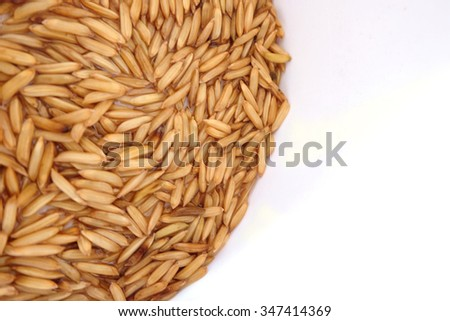 Brown paddy rice closed up background.