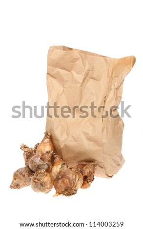 Brown paper bag and daffodil bulbs isolated against white