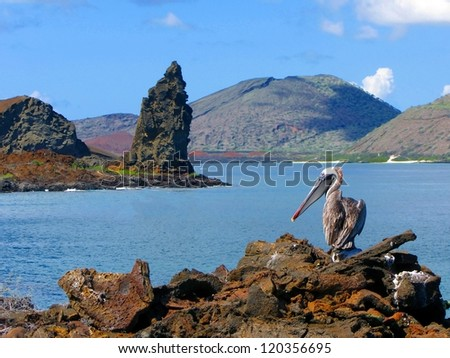 Brown Pelican with the Pinnacle Rock in the back, Island of Bartolome, Galapagos - stock photo