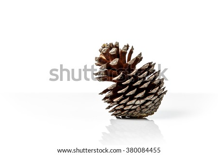 brown pine cone isolated on white background - stock photo