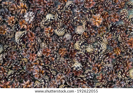 Brown pine cones as a background - stock photo