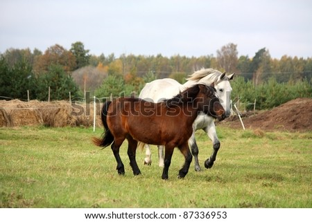 Brown pony and white horse running at the field