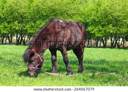 Brown pony grazing on fresh green grass of spring park