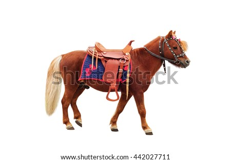 Brown pony with saddle standing and isolated on white background