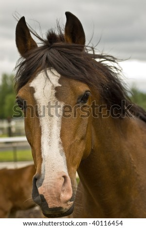 Brown quarter horse portrait close up with dramatic sky background. - stock photo