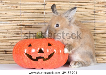 brown rabbit and a halloween pumpkin - stock photo