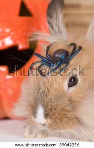 brown rabbit, halloween pumpkin and a spider - stock photo