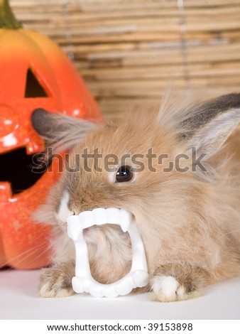 brown rabbit with vampire teeth, halloween pumpkin - stock photo