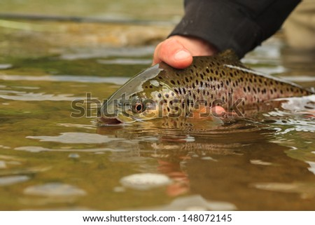brown release - stock photo