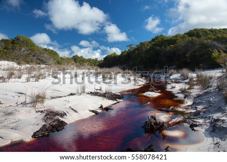 Brown river in white sands on Fraser Island, Australia. Sand landscape.