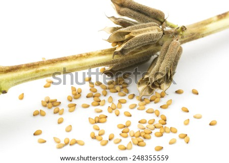 Brown sesame seeds and stem on white background - stock photo