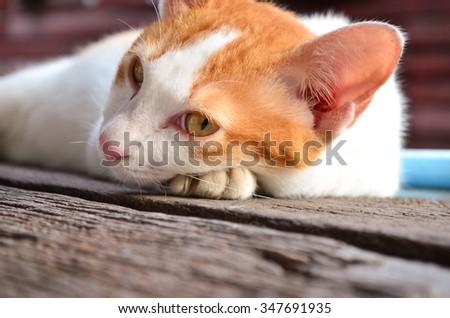 Brown Sleepy cat - stock photo