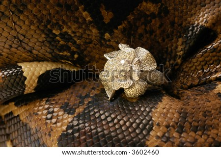 Brown snake with modern jewelrys 12 - stock photo