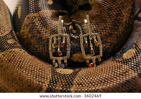 Brown snake with modern jewelrys  9 - stock photo