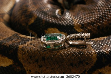 Brown snake with modern jewelrys 10 - stock photo