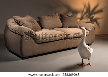 Brown sofa made of goose down with pillows on a dark background with a shadow in form of plant, with a white goose standing in front - stock photo