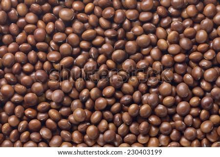 brown soybean - stock photo