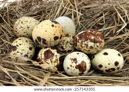 Brown speckled eggs in a nest of dry grass - stock photo
