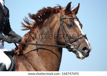 Brown sport horse portrait on sky background - stock photo