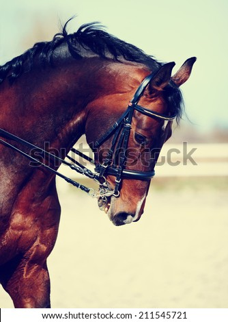 Horse stock photos royalty free images vectors for Thoroughbred tattoo lookup