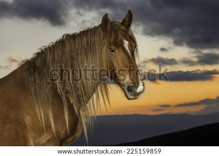 Brown Stallion portrait with sunset background and cloudy sky