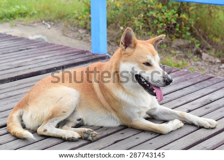 brown stray dog walking on wooden bridge in garden - stock photo