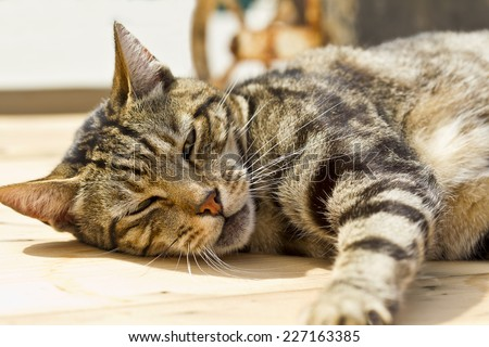 brown stripy cat lying in the sun and sleeping on a table - stock photo