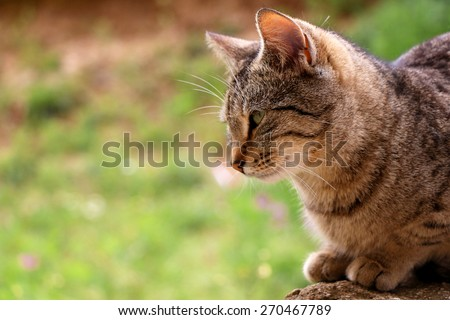 Brown tabby cat in the garden, head close-up. Natural light, selective focus and green background, copy space. - stock photo