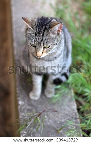 Brown tabby cat sitting in a garden. Selective focus.