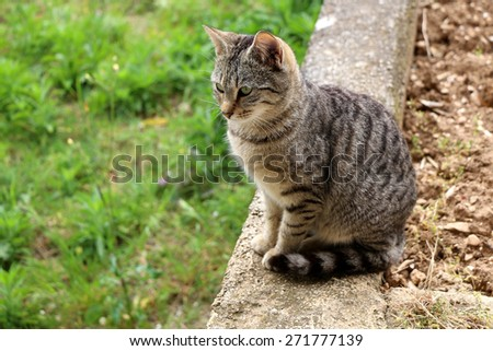 Brown tabby cat sitting on the wall in the garden. Natural light, selective focus.  - stock photo
