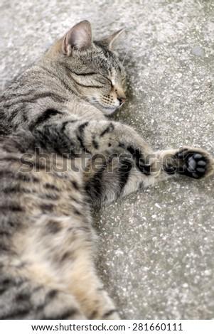 Brown tabby cat sleeping. Vertical format, selective focus.  - stock photo