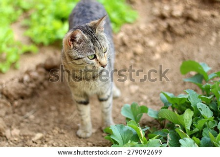 Brown tabby cat walking in the garden. Natural light, selective focus. - stock photo