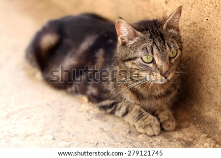 Brown tabby cat with beautiful big green eyes, lying outdoor. Natural light, selective focus.  - stock photo