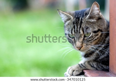 Brown tabby cat with big green eyes lying in the garden. Selective focus, green background, with copy space. - stock photo
