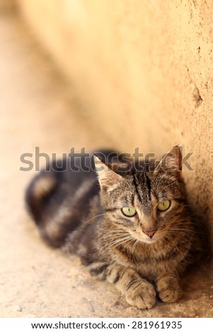Brown tabby cat with big green eyes lying outdoor. Vertical format, selective focus. - stock photo
