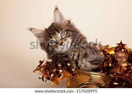 Brown tabby Maine Coon kitten with brown bronze Christmas festive ornaments on beige background - stock photo