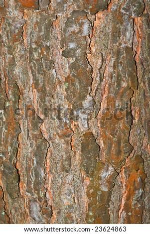 brown tree bark texture - stock photo