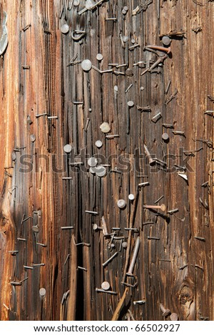 Brown Utility Pole covered with nails and staples - stock photo
