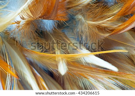 Brown vintage color trends chicken feather texture background,Interior soft luxury heaven angels,Modern image used for design living room,office and others