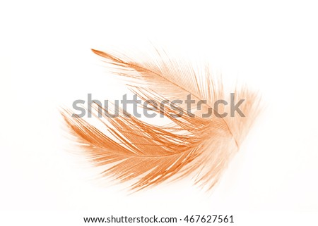 Brown vintage color trends feather
