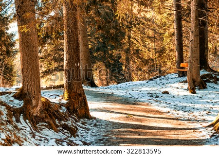 Brown walk path in a forest of green pines, spruces and firs on Dolomites in winter - stock photo