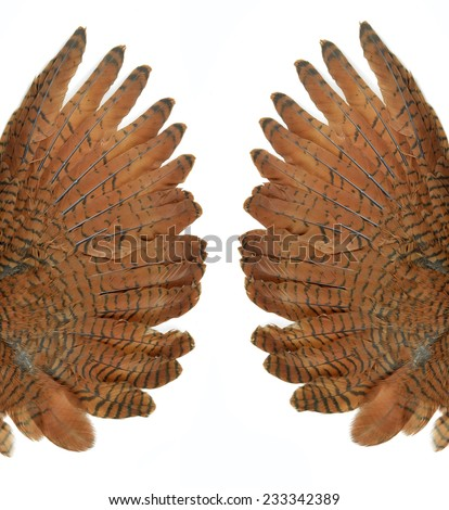 Brown wings of the bird isolated on white - stock photo