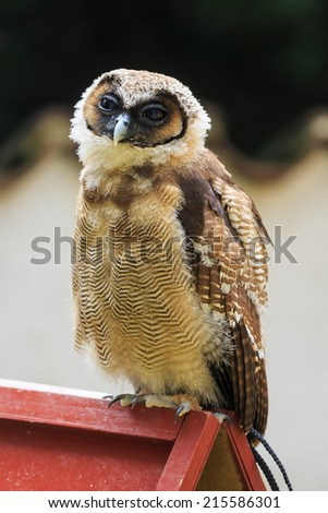 Brown wood owl sitting on the small roof - stock photo