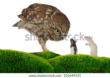 brownie  horned owl and rat  on a white background - stock photo