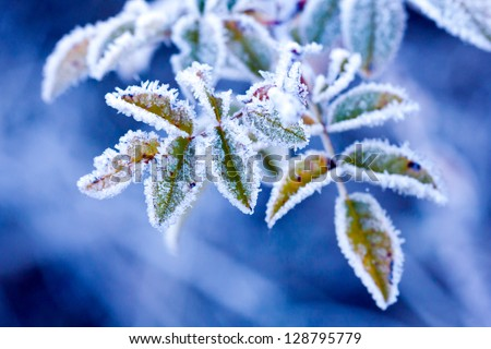 brunch in frost - very shallow focus - stock photo