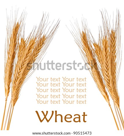 Brunch of the golden wheat