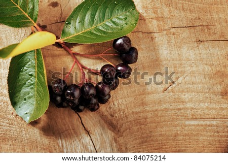 brunches of ash-berry over wooden background, autumn - stock photo