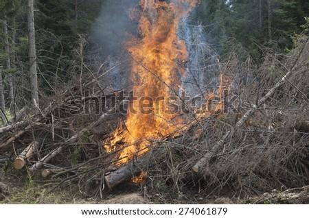 Brush Fire - stock photo