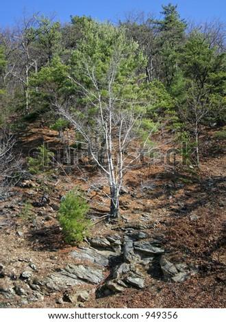 Brush on Mountain - stock photo